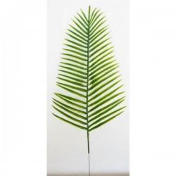 48 Palme Canariensis Pm