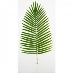 48 Palme Canariensis Gm